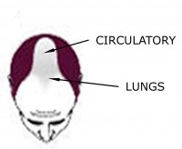Male Pattern Baldness: Lung Issues