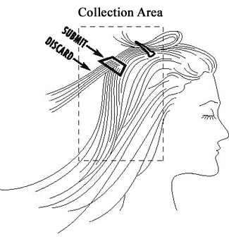 hair analysis - collecting the hair sample