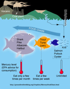 Mercury poisoning for How much mercury is in fish