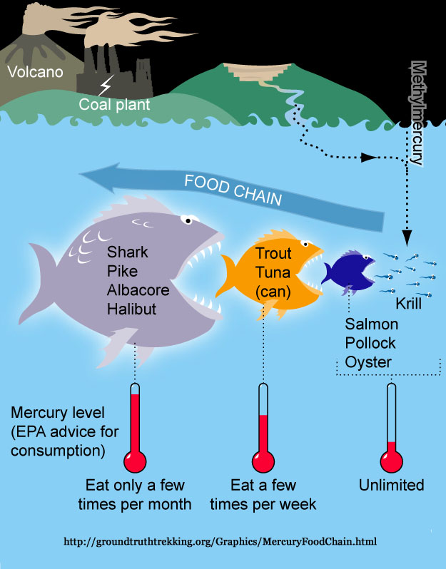 Mercury poisoning for Fish with high levels of mercury