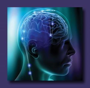 Brain showing activity.