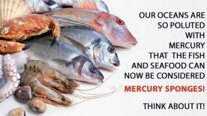 Mercury in Seafood